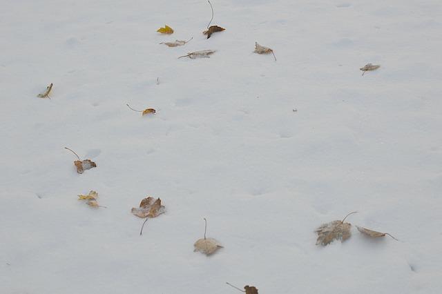 Snowleaves1