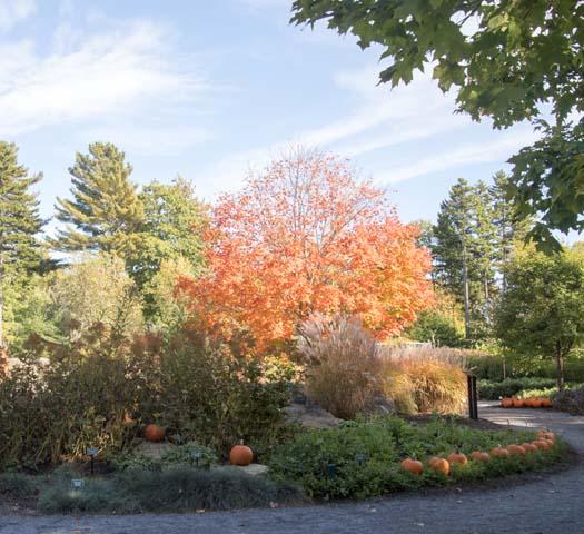 Botanicalgardens_1